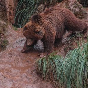Bitcoin [BTC] Technical Analysis: Bear drags the coin through mud