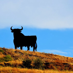 Bitcoin [BTC] Price Analysis: Coin reunites with the bull after escaping the bear trap