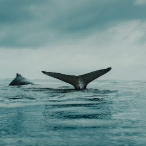 Is there any point in wishing away Bitcoin whales?