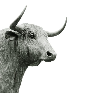 XRP and Stellar Lumens [XLM] Price Analysis: Coins ride the bull wave after weeks of stagnancy