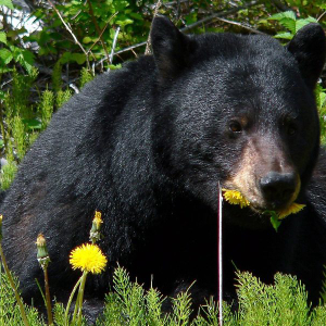 XRP/USD Price Analysis: Bears feast on coin as bulls abandon market