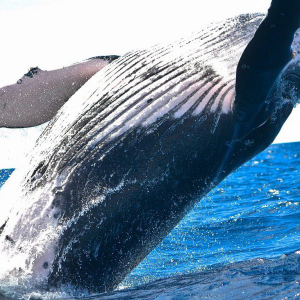 Whaling season hurts Bitcoin, XRP, Ethereum & Chainlink