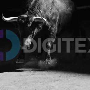 Digitex Futures está listo para desatarse