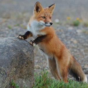 Ripple [XRP] y Coil se asocian con Mozilla para conseguir un Internet libre de publicidad