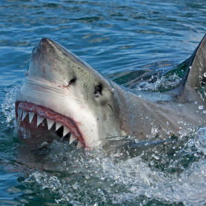 Only Sharks Will Feed on the Crypto Market's Elusive Price Bottom