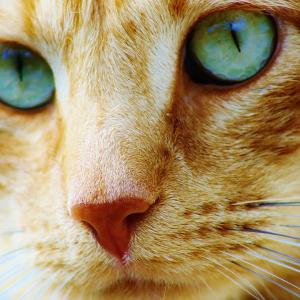 Viabtc Founder Reveals BCH Fork Idea Called Bitcoin Cat