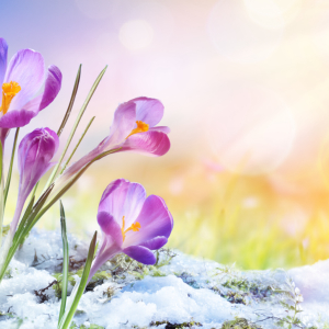 Blockchain Projects Bloom as Crypto Spring Fuels a Fundraising Boom