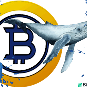 Bitcoin Gold Whale Allegedly Controls Half the BTG Supply