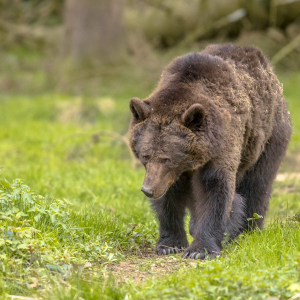 Bears Back as Bitcoin (BTC) Slides, Is A Breakdown Imminent?