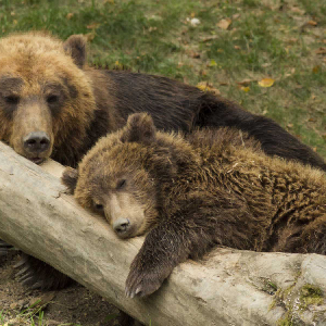 Bitcoin Price LIVE: Mounting Bitcoin Shorts Precarious for the Bears