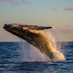 Bitcoin Whale Moves 47,000 BTC ($338 Million) as China Cracks Down on Crypto