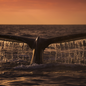 Bitcoin Whale Sends 5,500 BTC to Binance Worth $33.8M