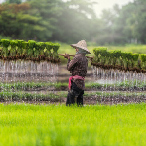 Global Charity Oxfam Launches Blockchain Project to Empower Cambodian Rice Farmers