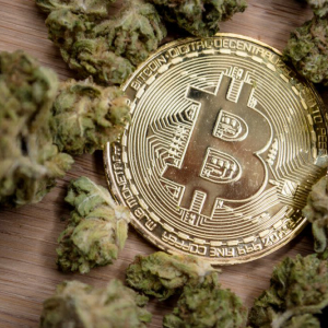 Wealth Manager: Pot Stocks Will Mimic Crypto Bubble – But Won't Crash Like Bitcoin