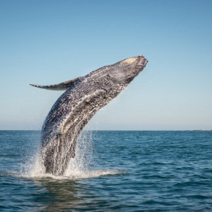 Bitcoin Whales are Stabilizing the Market, Not Crashing it: Research