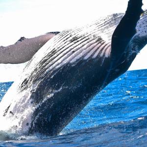 Massive $1 Billion Bitcoin Whale Transaction Makes Waves