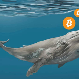 Bitcoin Whales Dominate BTC Price Movement and Ownership Even Today