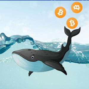 Whale Moves $43 Million USD Worth Of Bitcoin (BTC) From Xapo Exchange As Accumulation Period Sets In