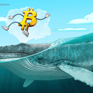 Bitcoin Whale Numbers Hit 2-Year High as Investors Mirror 2016 Halving