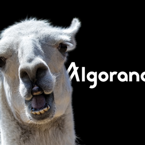 """Insane Valuation"": Algorand $66M Token Auction Implies $24bn Value"