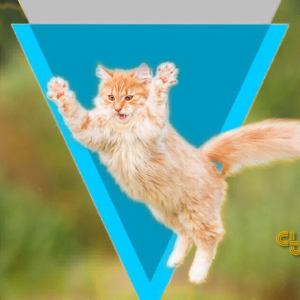 Verge Price Analysis XVG / USD: Dead Cat Bounce