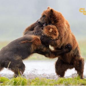 Bitcoin Price Analysis BTC / USD: Bears Going For Broke