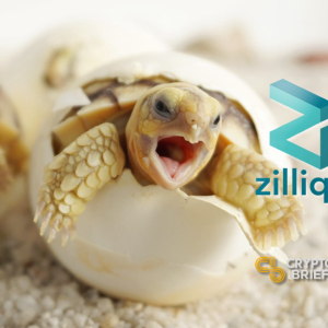 Zilliqa Hopes Its New Incubator Will Hatch New dApps