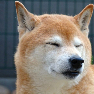 Dogecoin ($DOGE) Developers Announce Update For Internet's Favorite Meme Cryptocurrency