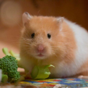 $DOT, $ADA, $ETH Among Top Holdings of Successful Crypto Trading Hamster 'Mr. Goxx'
