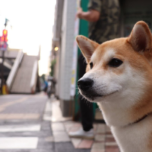 Scammers Are Impersonating Dogecoin's Creator to Steal Cryptocurrency