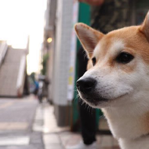 Malicious Scammer Targets 10,000 Dogecoin Users, Russian Cybersecurity Firm Reports