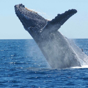 Bitcoin Whale Moves $1.1 Billion in BTC for Less Than $4