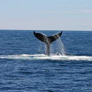 Bitcoin Holds on to $3,650 Mark as BTC Whales Start Resurfacing
