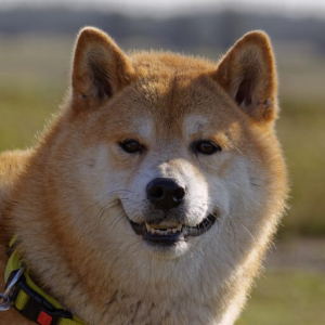 Is $SHIB Better Than $DOGE? And Other Crypto ($BTC, $ETH, $CHZ) News From Paraguay
