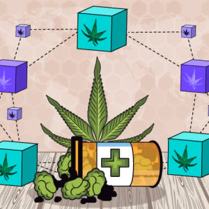 Blockchain Application in Aiding Prospects of Cannabis Industry