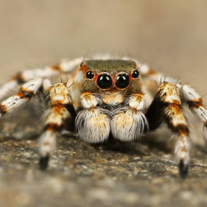 Spider crypto routing scheme can stop off-chain traffic jam