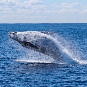 Bitcoin whale moves $1B at a fees of just $80