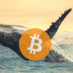 Bitcoin Whales Slow Down Following Months of Accumulations: What About BTC Price?