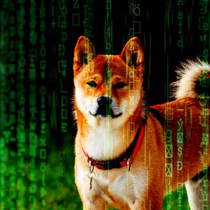 Dogecoin (DOGE) is now being used by crypto hackers after TikTok boom