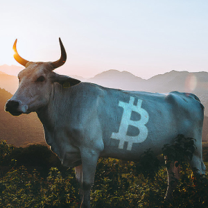 "Synthetix founder calls Bitcoin's weekly chart the ""most bullish thing"" he has seen"