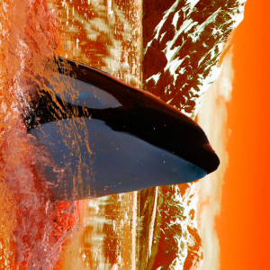 Crypto Whales Move $780 Million in Bitcoin As Ripple Transfers 110,175,722 XRP