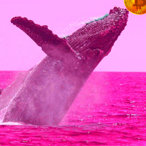 Crypto Whales Emerge As Traders Track 28,521,383 XRP and 5,376 Bitcoin (BTC) on the Move