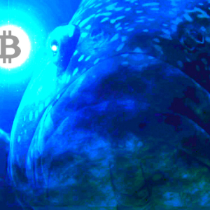 Bitcoin Whales Move $84 Million in Crypto As Market Rallies – BTC, XRP, Ethereum, Litecoin, Stellar, Bitcoin Cash, Tron Forecasts