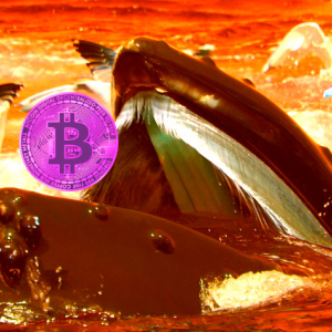 $186,000,000 in Bitcoin (BTC) on the Move As Report Shows Crypto Whales Are Multiplying at Rapid Rate