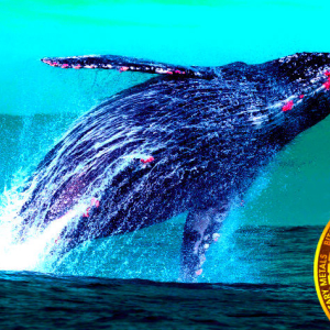 Bitcoin Whale Says He's Done Dumping BTC As Cryptocurrency Market Turns Green
