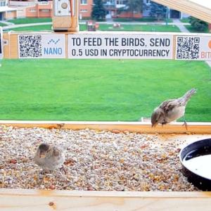 Anonymous YouTuber sets up bitcoin bird-feeder