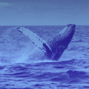 Whales trade big despite stagnant Bitcoin market