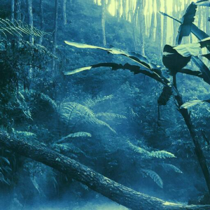 Brazil Rainforests Are Getting a $182 Million Blockchain Boost