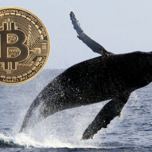 Bitcoin Whales Making a Splash: Did 9 Transactions Valued at $236m Spark the Market?