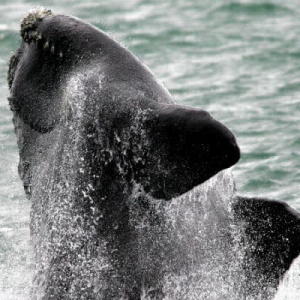 Bitcoin Whale Pumps $1 Million-Worth of Bitcoin into Roobee